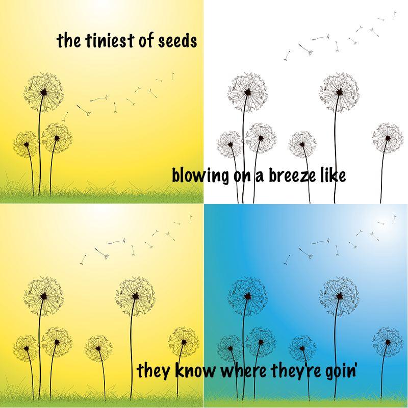 dande seeds1