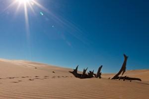 Sand Dunes (8 of 20)-L